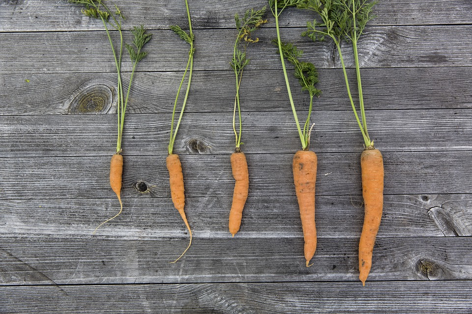 Putting data before the carrot